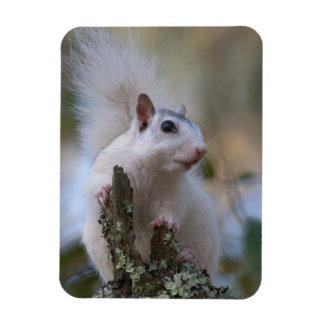 Astronaut Squirrel Magnet