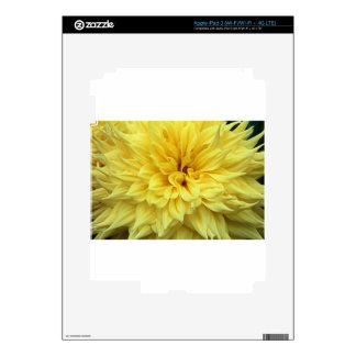 Asunto tórrido iPad 3 skin