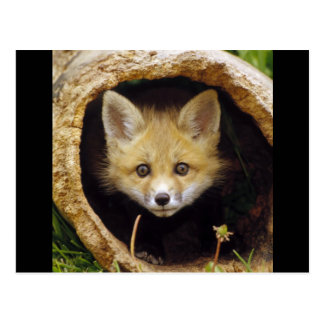 Asustado poco Fox Postal