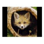 Asustado poco Fox Tarjeta Postal