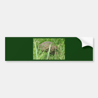 At Ease In Your Own Shell Bumper Sticker