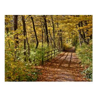 At Fall In Wienerwald Postcard