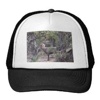 at Grand Canyon Mesh Hat