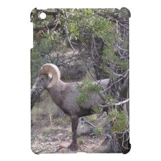 at Grand Canyon iPad Mini Cases
