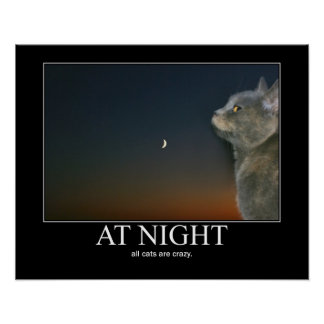 At Night Cats are Crazy Artwork Poster