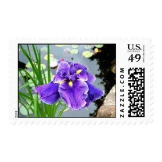 """At Pond's Edge...Purple Iris"" Postage"