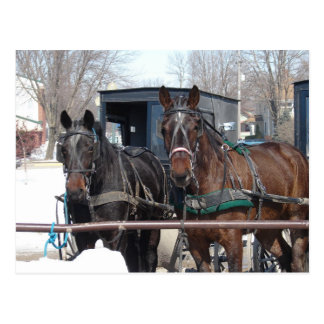 At the Hitching Post Postcard