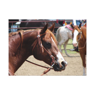 At The Horse Show Canvas Print