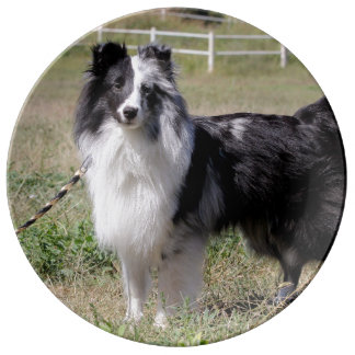 At the Ranch: Bi-blue Merle Sheltie Plate