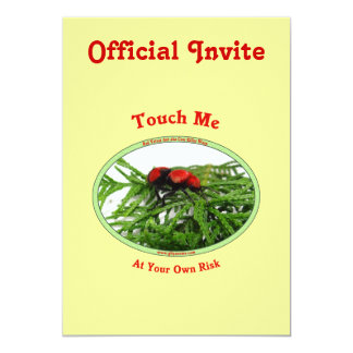 At Your Own Risk Cow Killer Wasp Card