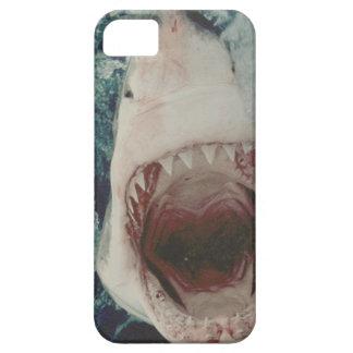 Ataque del tiburón iPhone 5 coberturas