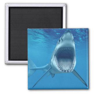 ¡Ataque del tiburón! Imán Cuadrado