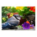 ATC del arrendajo azul y de las flores Tarjetas De Visita