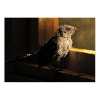 ATC del Catbird del bebé Tarjetas De Visita Grandes