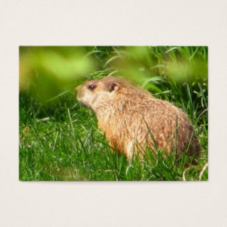 ATC del ~ de la marmota Tarjetas De Visita Grandes
