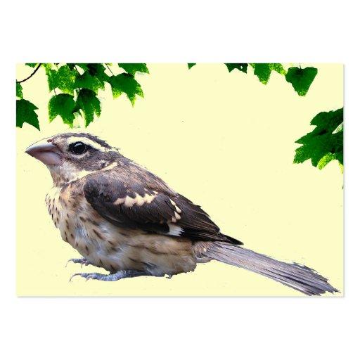 ATC del pájaro de bebé Tarjetas De Visita Grandes