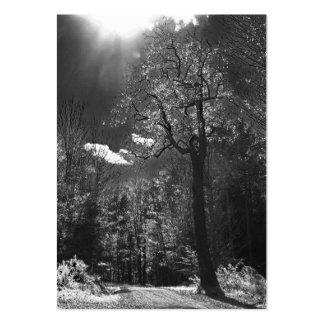 ATC iluminado del árbol Plantillas De Tarjetas Personales