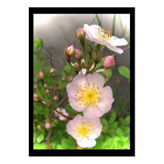 ATC salvaje de los rosas Tarjetas De Visita