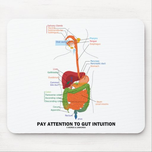 Atención de la paga a la intuición de la tripa (si tapete de ratones
