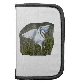 Aterrizaje blanco del Egret en pantano Planificadores