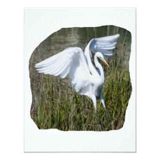 Aterrizaje blanco del Egret en pantano Invitación