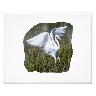 Aterrizaje blanco del Egret en pantano Cojinete