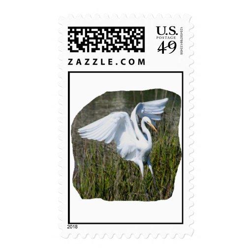 Aterrizaje blanco del Egret en pantano Sello