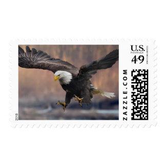 Aterrizaje de Eagle calvo Sello Postal