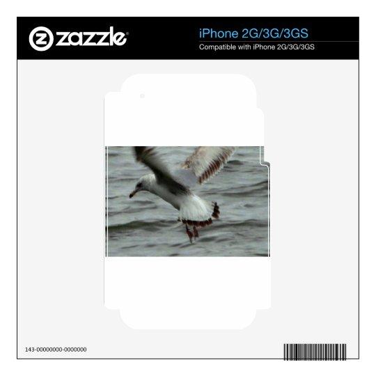 Aterrizaje de la gaviota en el río Potomac Calcomanías Para iPhone 2G