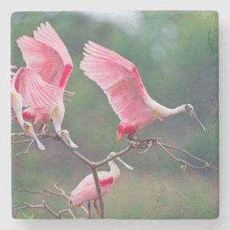 Aterrizaje de los Spoonbills rosados (Ajaia Ajaja) Posavasos De Piedra