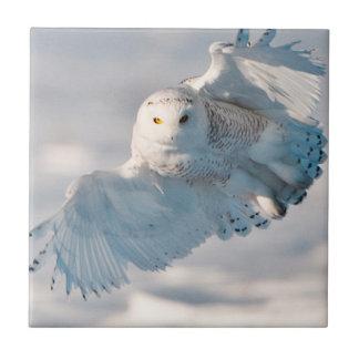 Aterrizaje del búho Nevado en nieve Azulejo Cuadrado Pequeño