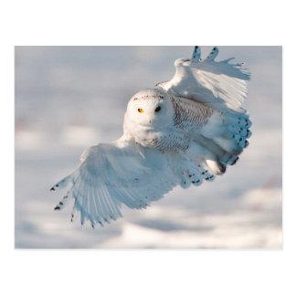 Aterrizaje del búho Nevado en nieve Postales