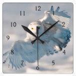Aterrizaje del búho Nevado en nieve Reloj Cuadrado