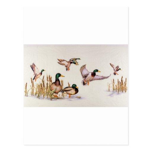 Aterrizaje del pato silvestre tarjeta postal