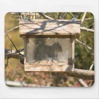 Atesore en el Birdfeeder 2 Mousepad Tapetes De Raton