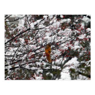 Atesore en un árbol 6233 tarjetas postales
