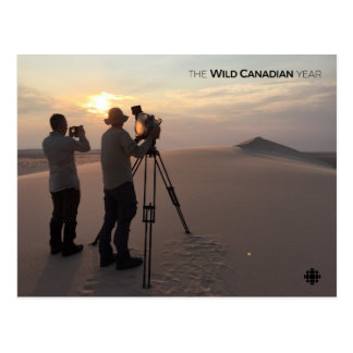 Athabasca Sand Dunes Postcard