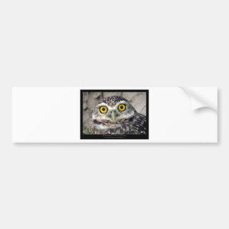 Athene cunicularia - Burrowing Owl 01 Car Bumper Sticker