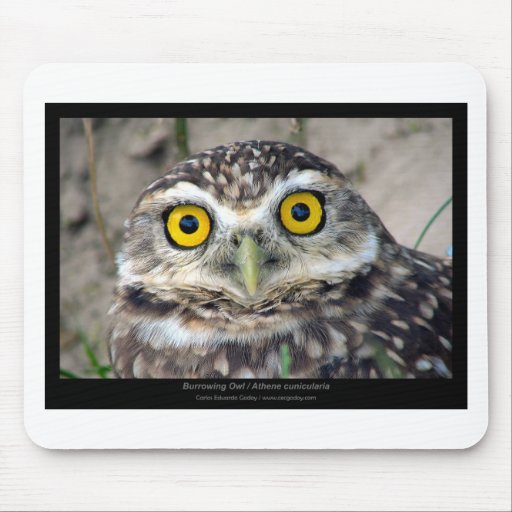 Athene cunicularia - Burrowing Owl 01 Mouse Pad