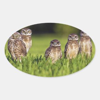 Athene de madriguera Cunicularia de 5 búhos Calcomanía Óval Personalizadas