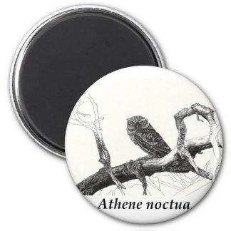 Athens noctua. 2 inch round magnet