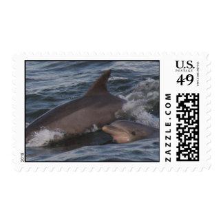 Atlantic Bottlenose Dolphin Stamp