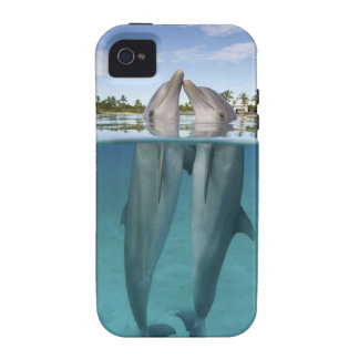 Atlantic Bottlenose Dolphins kissing iPhone 4/4S Cover