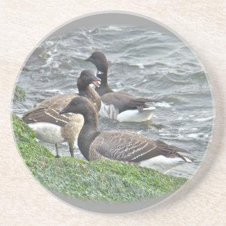 Atlantic Brant Geese Season's Greetings Series Drink Coasters