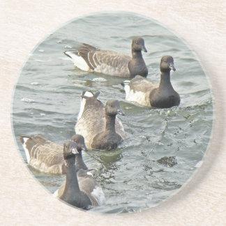 Atlantic Brant Geese Season's Greetings Series Beverage Coasters