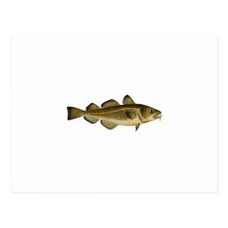 Atlantic Cod Postcard