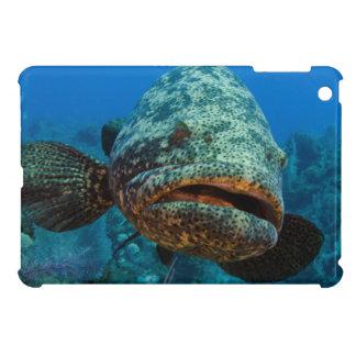 Atlantic Goliath Grouper iPad Mini Cases