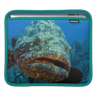 Atlantic Goliath Grouper iPad Sleeves