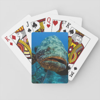 Atlantic Goliath Grouper Playing Cards