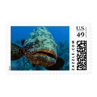 Atlantic Goliath Grouper Postage Stamp